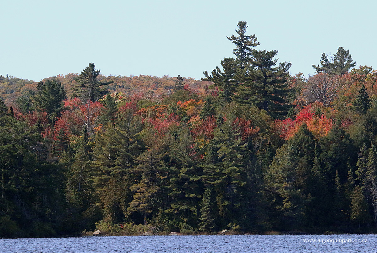 Fall colour at Source Lake in Algonquin Park on September 30, 2015