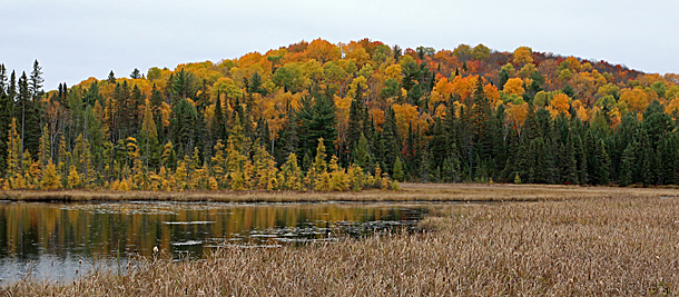 Algonquin Park Fall Colour on October 17, 2016
