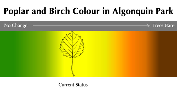 Current Poplar and Birch Colour Status in Algonquin Park