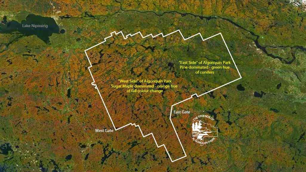 Algonquin Park's Fall Colour Seen From Space