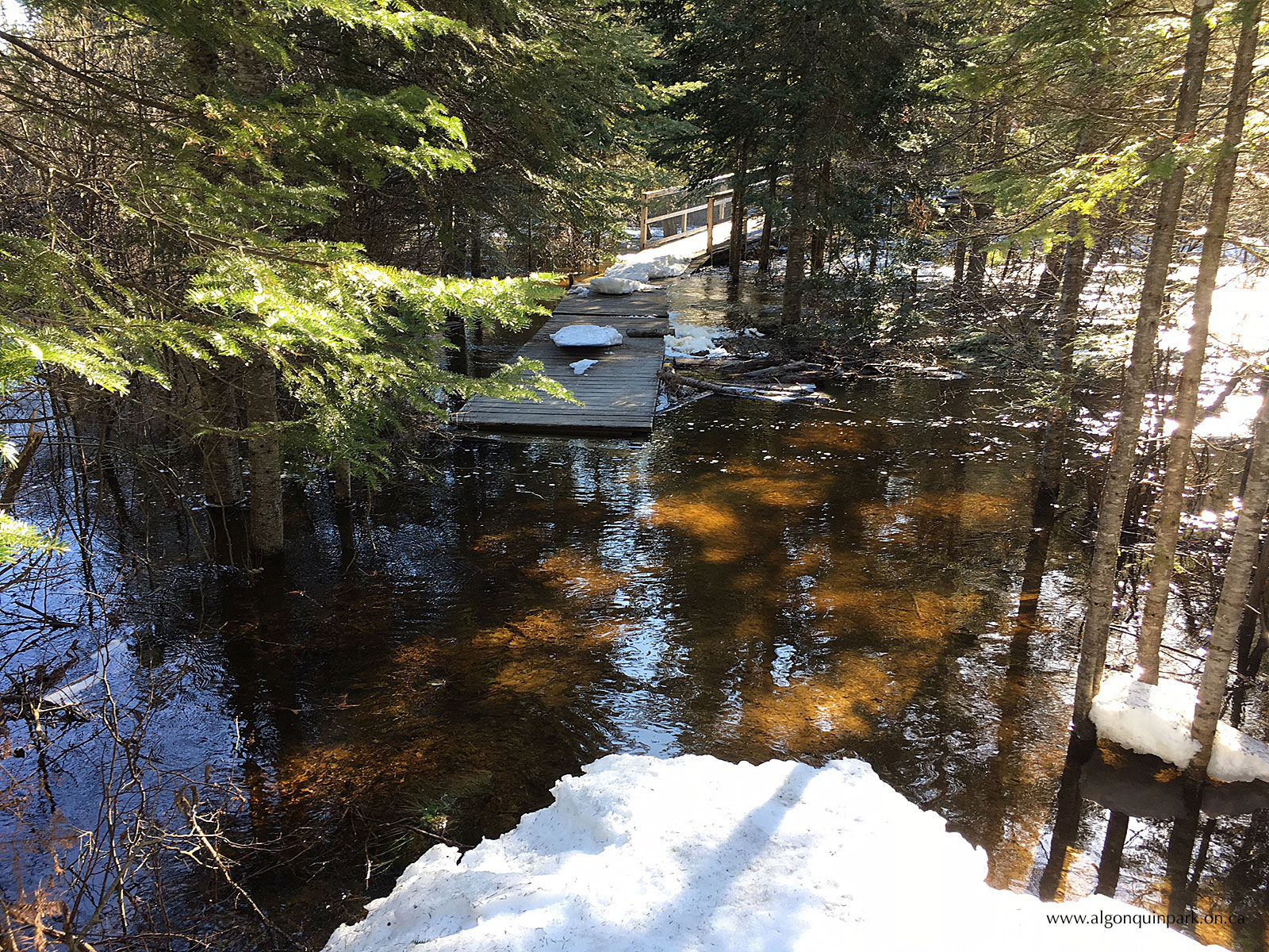 High water at the Highland Backpacking Trail in Algonquin Park on April 13, 2017.