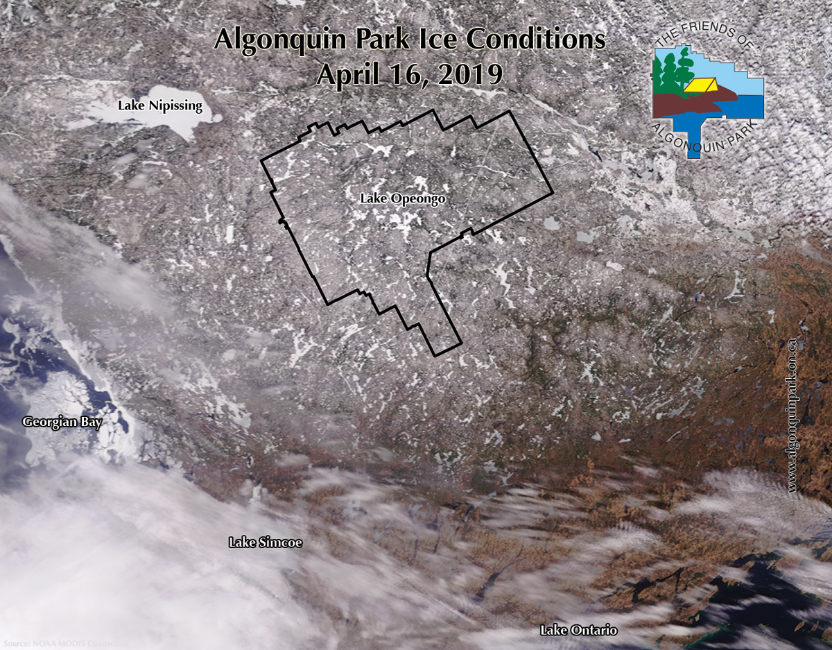 Algonquin Park Ice Out Conditions on April 16, 2019