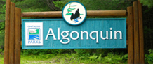 Latest Algonquin Park News