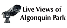 Live Views of Algonquin Park