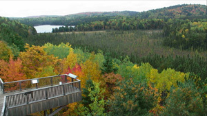 Algonquin Park Webcam Sample Fall Image