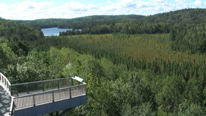 Algonquin Park Webcam Sample Summer Image