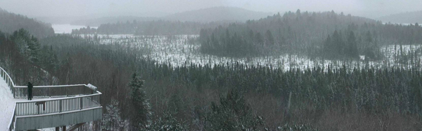 View from the Algonquin Park Webcam
