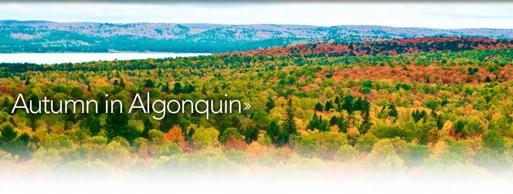 Algonquin Food Services