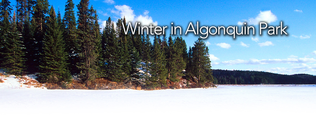 Winter in Algonquin Park